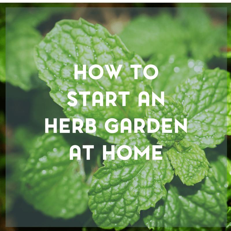 Starting an Herb Garden 3