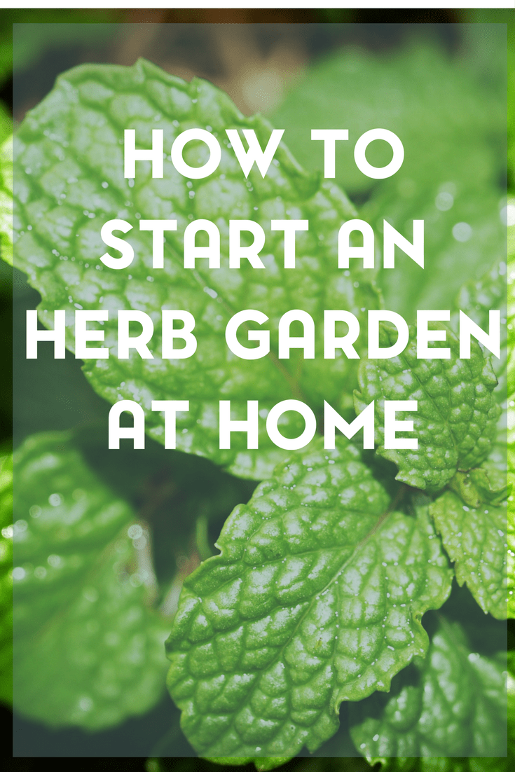 entuploads201503how to start an herb garden at homejpg altstarting an herb garden is easier than you think here are some tips and advice for - How To Start An Herb Garden