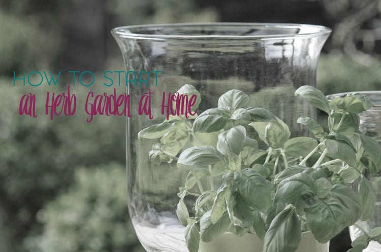 Starting an herb garden is easier than you think! Here are some tips and advice for starting an herb garden at home.