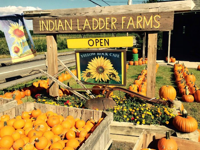 family friendly fall fun albany indian ladder farms