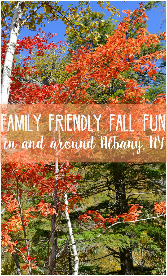 With Fall just around the corner, here are some great family friendly fall fun activities to do in and around Albany, NY. Stop by for a visit!