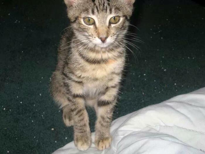 abby as a kitten