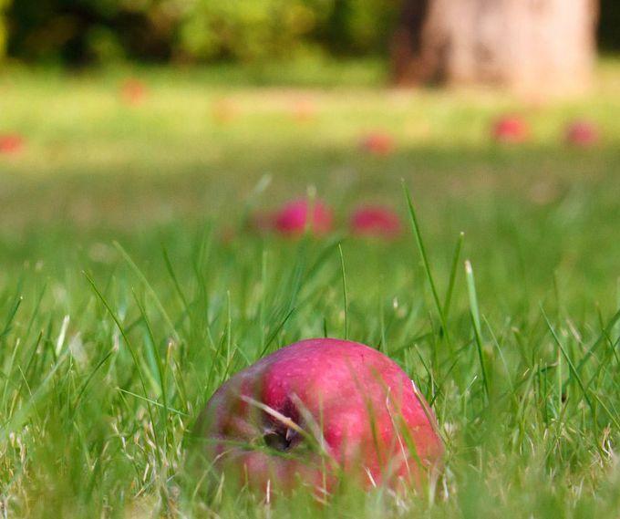 four season lawn care fall
