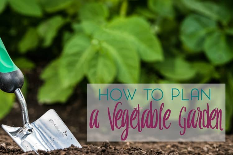 Have you thought about starting a garden? Here are a few tips for how to plan a vegetable garden at home.