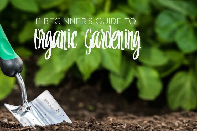 Is there really that much of a difference between organic gardening and regular gardening?