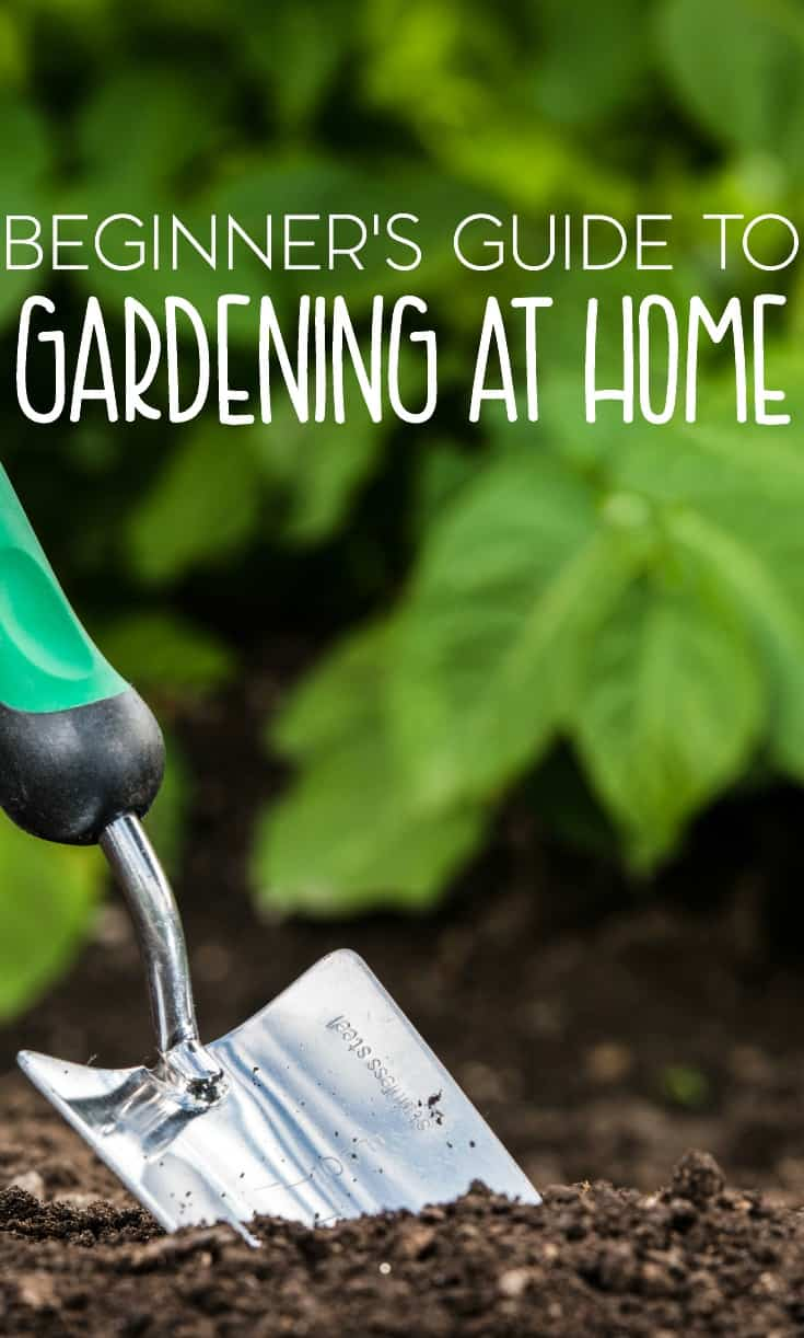 Gardening is one of America's favorite hobbies. Check out this beginner's guide to gardening to get started.