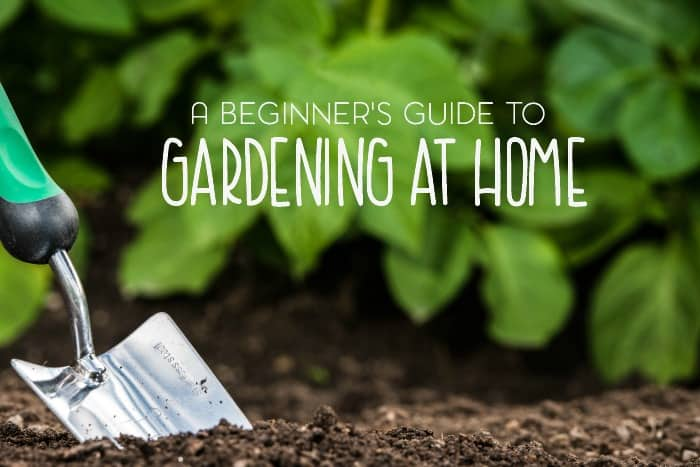 Have you thought about starting a garden at home? Be sure to check out my collection of posts in this beginner's guide to gardening.