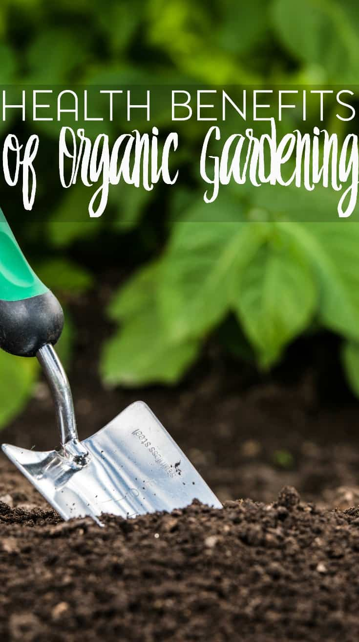 With the organic food craze still going strong, some are turning to organic gardening as well. But are there really health benefits of organic gardening?
