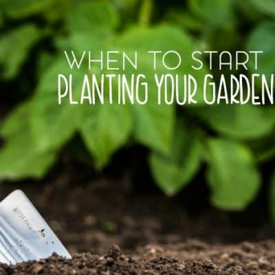 Location matters when it comes to planning a garden at home. Not just in terms of where you place your garden but also where you live. Here are some tips for when to start planting a garden.