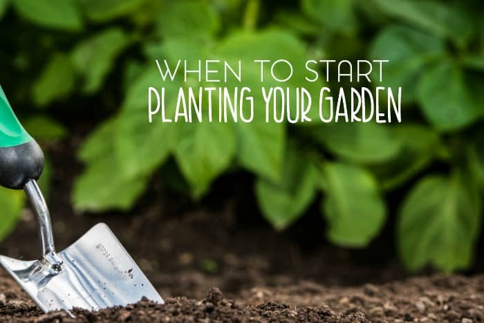 When to Start Planting a Garden at Home