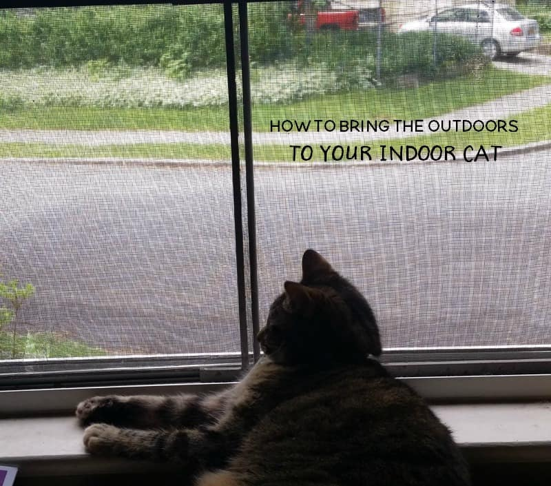 how you can bring the outdoors to your indoor cat