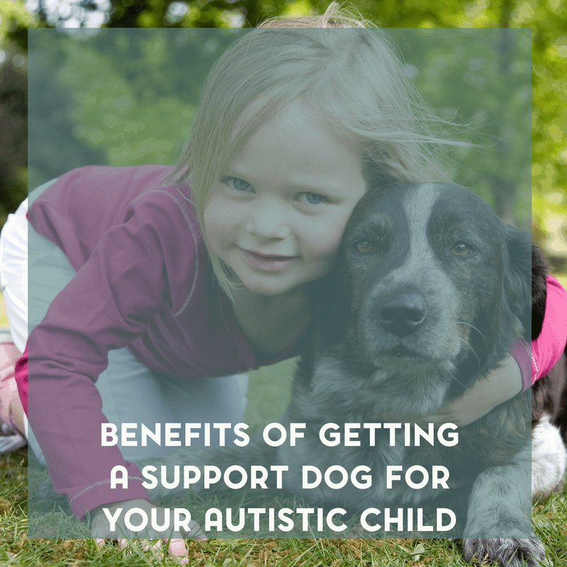 The Benefits of Getting a Support Dog for Your Autistic Child 1