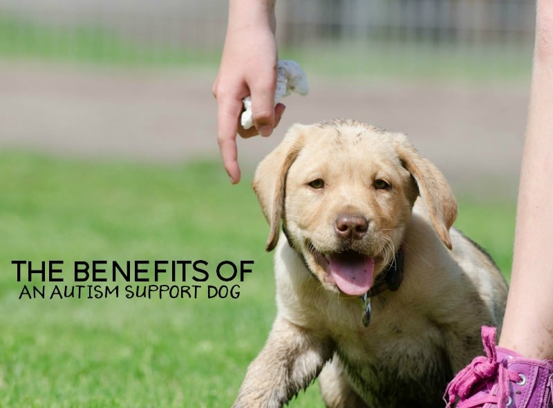 Benefits Of A Service Dog For Autism
