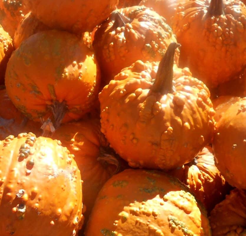 goosebump-pumpkins-for-texture