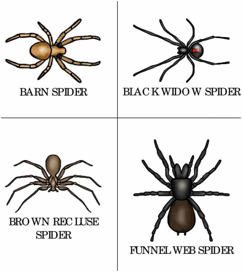 Spider Type Printable Cards For Toddlers And Preschoolers