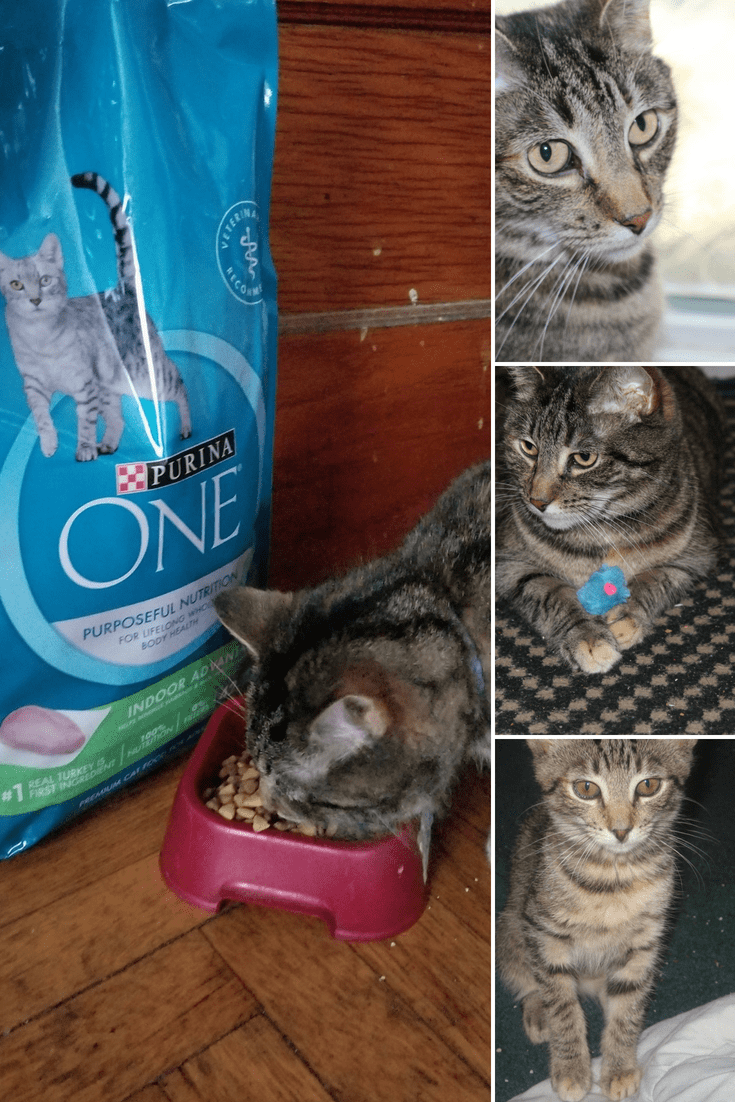 How to Prepare a Cantry for New Cat Parents 2