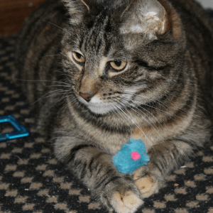How to Prepare a Cantry for New Cat Parents