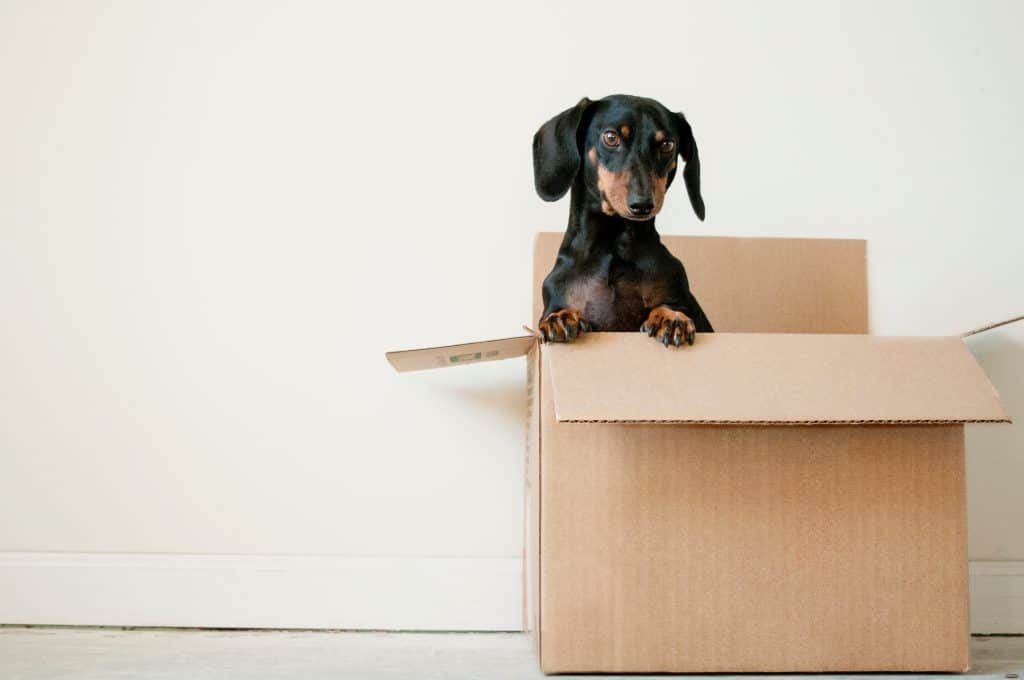 What You Need to Be Asking a Removals Company Before Getting a Quote 3
